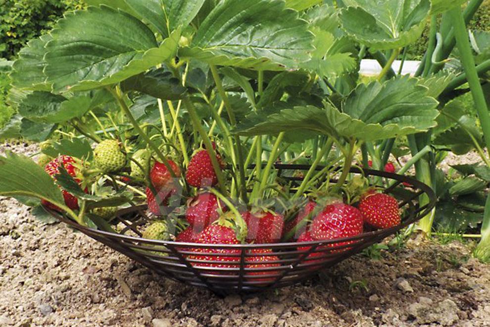 Подставки для ягод клубники своими руками